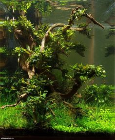 'Midday' by Alexander Maletin This shrimp tank was presented at the DENNERLE Scaper's Tank 2014 ""