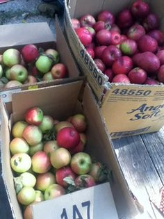 Detailed list of where lots of our apples were gathered one month, how they taste and how we'll use them. Even if a variety of apple doesn't taste great fresh, you can mix and match with other varieties for great applesauce and hard cider.