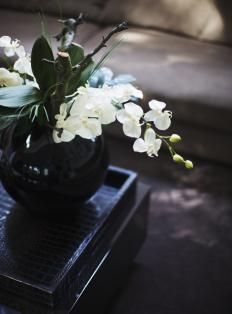 white orchids and tropical foliage