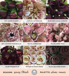 Plum wedding flowers and mauve wedding flowers create a beautiful color scheme featuring spring wedding flowers. Lilac Wedding, Wedding Bouquets, Wedding Flowers, Wedding Colors, Burgundy Wedding, Wedding Ideas, White Clematis, Ranunculus, Gardens