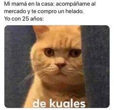 Bts Memes, Funny Memes, Cat Whisperer, F2 Savannah Cat, Spanish Memes, Managua, Funny Pictures, Kawaii, Pets