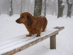 Зима уже началась.