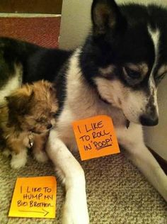 Bungled and the Botched: Photo Gallery!!! How to Shame Your Pet on the Internet
