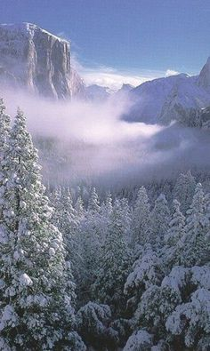 Yosemite National Park in the Winter. Yosemite is a U. National Park spanning Eastern portions of Tuolumne, Mariposa & Madera Counties in the Central Eastern portion of California. Beautiful World, Beautiful Places, Peaceful Places, Winter Szenen, Winter Travel, Winter White, Winter Colors, Winter Season, Winter Christmas