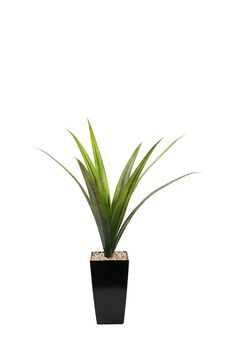 Agave In Flair Tall Pot| Mrphome Online Shopping