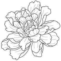 Flowers Art Drawing Tattoo Deviantart Ideas For 2019 Peony Drawing, Doodle Drawing, Floral Drawing, Art Floral, Flower Sketches, Botanical Illustration, Fabric Painting, Flower Tattoos, Flower Art