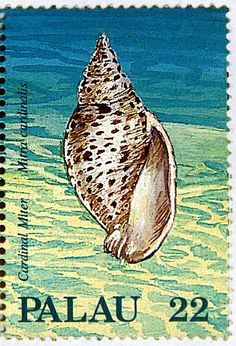 Palau.  SEASHELLS TYPE OF 1986.  CARDINAL MITER.  Scott 154 A20 Issued  1987 Aug 25, Lithogravured, Perf. 14. 22.