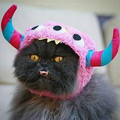 Lovable fuzzy monster