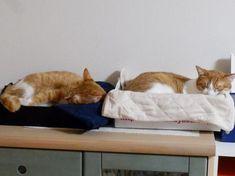 二匹の猫と徒然なるままに http://yuzuandkai.blogspot.com/
