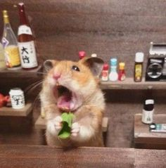 PetsLady's Pick: Funny Bartenders' Day Bartending Hamster Of The Day...see more at PetsLady.com -The FUN site for Animal Lovers
