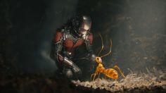 Marvel Phase II Ant Man