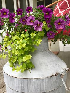 Mixed container ideas for your garden! Will Smith, Planters, Container, Gardens, Country, Flowers, Ideas, Home, Rural Area