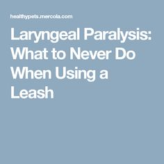 Laryngeal Paralysis: What to Never Do When Using a Leash