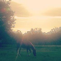 My neighborhood :) (my neighbors horse) <3