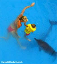 dolphin assisted therapy healing center melka hotel bali Lovina Bali, Dolphins, Exotic, Therapy, Healing, Island, Animals, Block Island, Animales