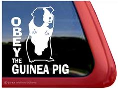 Obey the Guinea Pig - Window Decal. Cute design made from high quality vinyl sure to last for years. Get it at this link: http://www.nickerstickers.com/Guinea_Pig_Vinyl_Decals_p/dc769oby.htm #obeytheguineapig #guineapig #smallpets #pets #window #decal #nickerstickers