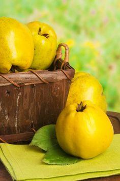 Quitten spät sommer herbst vitaminbombe im herbst