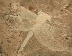 Dragonfly fossil, geological time: Lower Cretaceous (128 million years ago), Liaoning Province, China