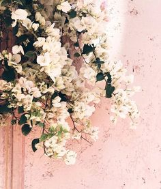 Spring: a reminder that it is okay to start over as many times as you need to always bloom where you are planted and never compare yourself to the flower growing next to you. | photo: @vickyheiler