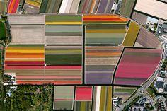 Tulip Fields in Lisse, Netherlands www.itsnicethat.com