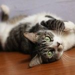 Featured Adoptable Cats and Dogs from the Humane Society of Dallas County