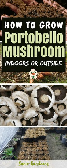 How To Grow Portobello Mushroom at Home #growmushroom #gardening #indoorgardening