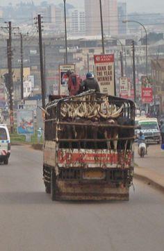 Kampala. Uganda. HC