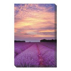 West of the Wind OU-79100 Lavender Sunrise Canvas Outdoor Print at ATG Stores