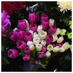pink white tulips