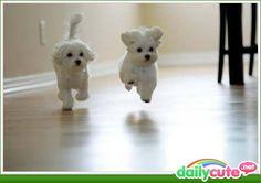 Puppies Racing(: