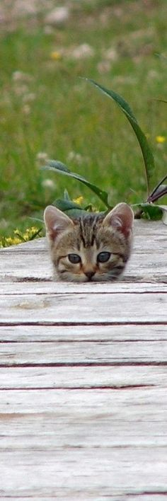 kitty peeking through a walkway