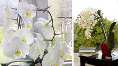Zvädnutá či poškodená orchidea? Pomôže cukor! - Pluska.sk Flowers Nature, House Plants, Glass Vase, Home And Garden, Gardening, Crafts, Home Decor, Ursula, Clever Tips