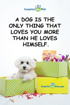 For as low as $29 a month Surprise My Pet not only carefully selects products your dog would love, but each package shipped will work towards helping animals in need.