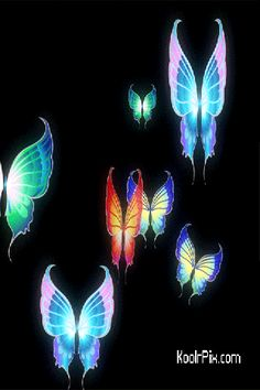 Butterfly gif