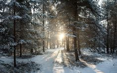 """Winter in Wisconsin's Northern Woods - sunrise = beauty. """"He is richest who is content with the least, for content is the wealth of nature. Denmark Winter, Winter Wonderland Wallpaper, Wisconsin Winter, Forest Sunset, Photography Tours, Sunset Landscape, Tree Forest, Snow Forest, Forest Path"""