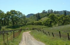 Oak trees, California's Pope Valley