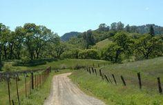 Oak trees, California's Pope Valley