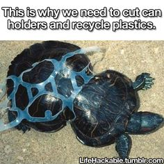 This turtle crawled through a discarded plastic ring of a 6-pack when it was a baby and now is being forever strangled in a plastic hangman's noose. Share this if you're not okay with it.
