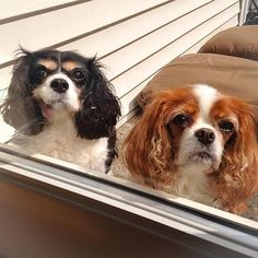 Bella and Chelsea - Let us in human!!!