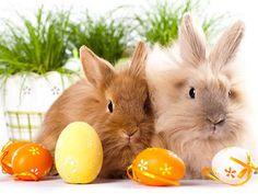 Buona Pasqua con i tuoi ... amori