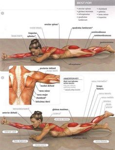 Glutes Exercises & Glutes Workouts Butt Back Training Lowbac.- Glutes Exercises & Glutes Workouts Butt Back Training Lowback ab – Yeah We Train ! Fitness Workouts, Sport Fitness, Butt Workout, Fun Workouts, Yoga Fitness, At Home Workouts, Fitness Tips, Fitness Motivation, Health Fitness