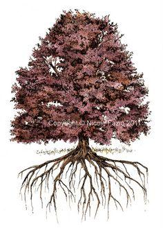 Recent job; oak tree illustration