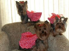 Little ladies in red
