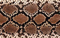 Snake Print Wallpaper Free Download HD Widescreen Wallpapers Snake Skin