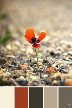 ZJ Colour Palette 69 #colourpalette #colourinspiration