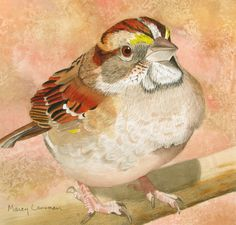 """Contemporary Painting - """"White-throated Sparrow"""" (Original Art from Marcy Lansman)"""