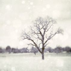 Winter photography tree photo snow minimalist art  - Walk out to Winter  -  Black and white photograph- Dreamy Winter Tree