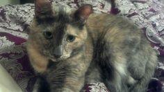 Sookie keeps me company when Marks away :) #tortie