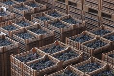 "2015 promises to be a memorable vintage.  Here you see the modern grape-drying facility called ""Terre di Fumane"", where grapes are laid out to rest before being used to make Amarone and Recioto. #Amarone #Allegrini #Recioto #wine #grape #Valpolicella"