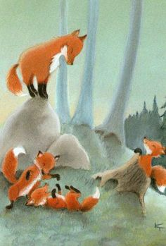 rävar Foxes